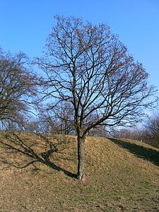 tree, nature, field