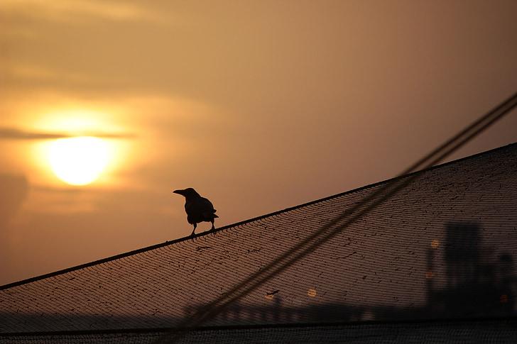 Západ slunce, pták, silueta, ptačí siluety, Vrána, rybářské sítě
