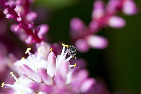 lill, Makro fotograafia, Tropical, mesilane, lilla, polen, Suurendus: