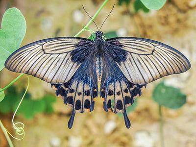 vlinder, vleugels, vlinder vleugels, natuur, vlinder op bloem, diversiteit, Tuin