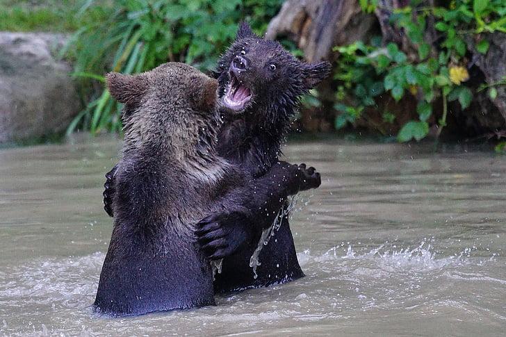 bear, brown bear, predator, teddy, mammals, dangerous, play