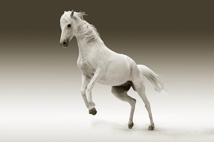 dier, oog, paard, natuur, Studio, schot, springen