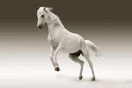 動物, 目, 馬, 自然, スタジオ, ショット, ジャンプ