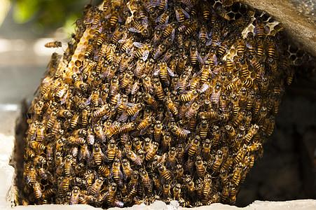 abelles, rusc, mel, insecte, natura, rusc, natural
