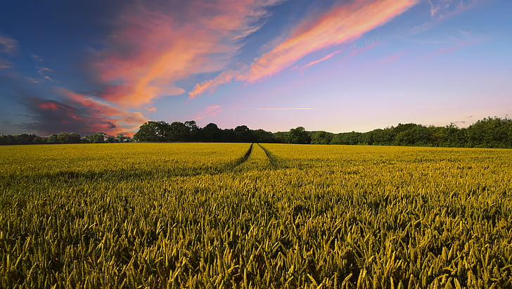 countryside, harvest, agriculture, farm, nature, field, summer