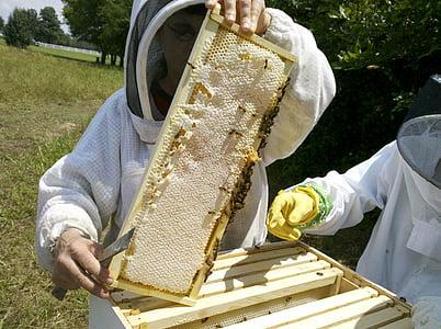 abella de la mel, inspeccions de rusc d'abelles, colomar, apicultor, mel, abella, rusc