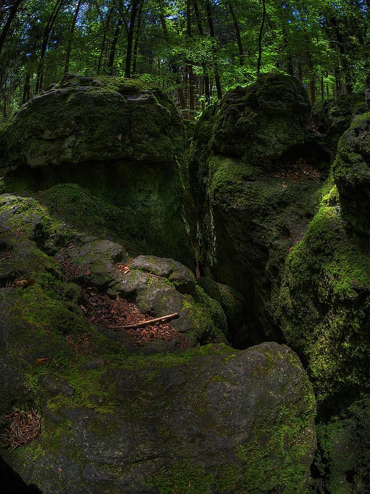 kaya, yosun, Orman, Yeşil, bemoost, doğa, vahşi