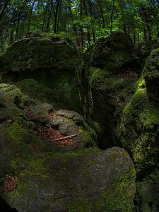 rock, moss, forest, green, bemoost, nature, wild