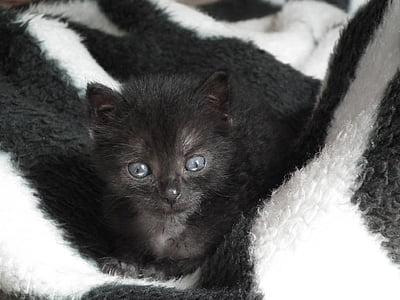 Kätzchen, wenig, Katze, Haustiere, Tiere, Katzenaugen, Katzenauge
