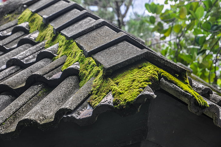 moss, roof, moss on the roof, building, plants, green, grey