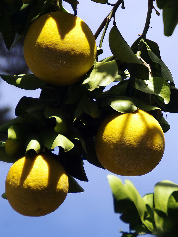 Mèxic, aranja, groc, fruita, cítrics, cítrics, aliments