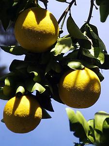 Mexique, pamplemousse, jaune, fruits, agrumes, agrumes, alimentaire