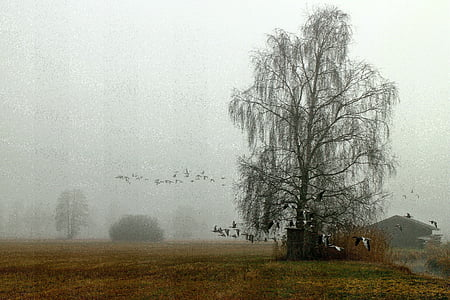 flock of birds, landscape, fog, haze, atmosphere, migratory birds, geese