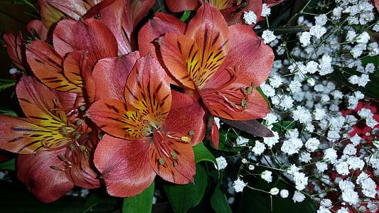 Blumen, Frühling, Frühlingsblume, Natur, Grün, Flora, Sommer
