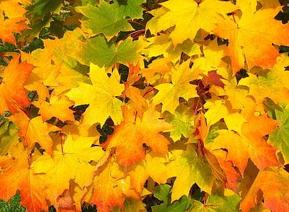 pozostawia, jesień, upadek, kolorowe, żółty, pomarańczowy, sezon