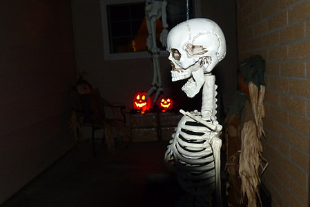 skeleton, halloween, spooky, holiday, bones, skull, horror