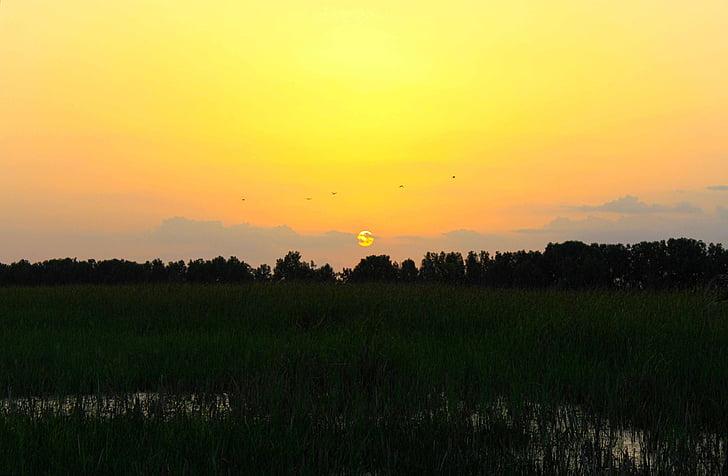 solnedgång, landskap, naturen, solljus, fältet, soluppgång, gul