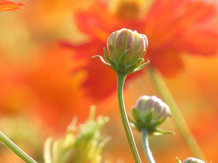 flor, brot, esperança, planta, natura, creixement, bellesa en la naturalesa