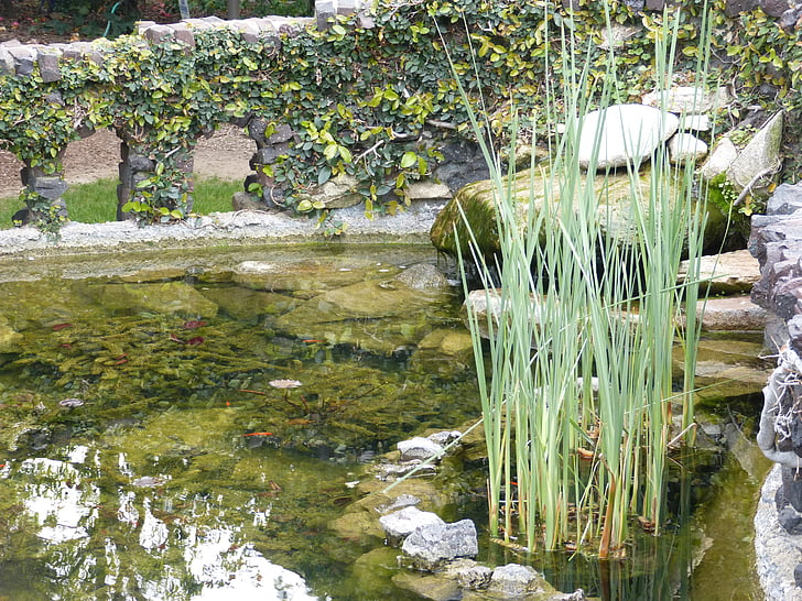 pond, fish pond, water, stone wall, ivy, nature, gamble house pond