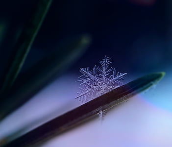 snowflake, snow, ice crystal, winter, frozen, winter magic, crystal
