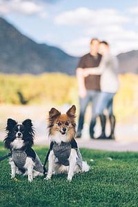 petit, marró, blanc, gos, al costat de, negre, herba