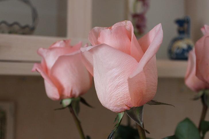 flors, Roses, Rosa, rosa Rosa, Roses roses, Rosa tendre, flor