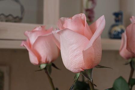 flores, Rosas, rosa, rosa rosa, rosas rosadas, Rosa tierno, flor