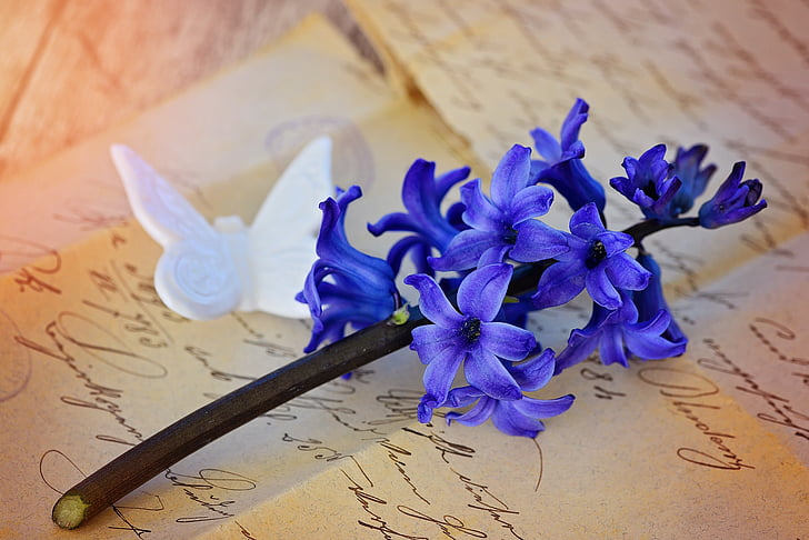 eceng gondok, bunga, Blossom, mekar, biru, wangi bunga, wangi