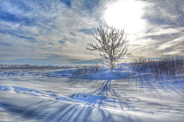 snowy landscape, lonely tree, winter sun, winter nature, slovakia