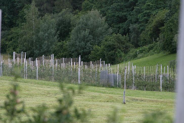 Plantation, veini, veini riputada, Geenitehnoloogia veini tootmises