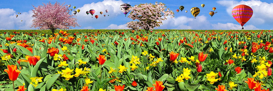 nature, spring, fly, balloon, flowers, tulips, daffodils