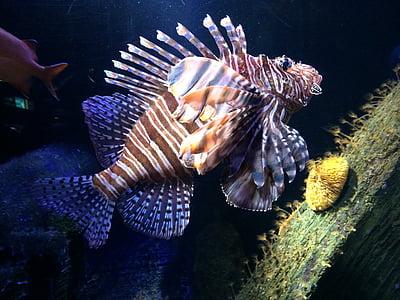 акваріум, риби, підводний світ, підводний, підводних, море життя, одна тварина