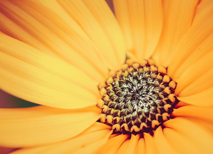 Hoa, Thiên nhiên, thực vật, Sân vườn, mùa hè, màu vàng, đóng