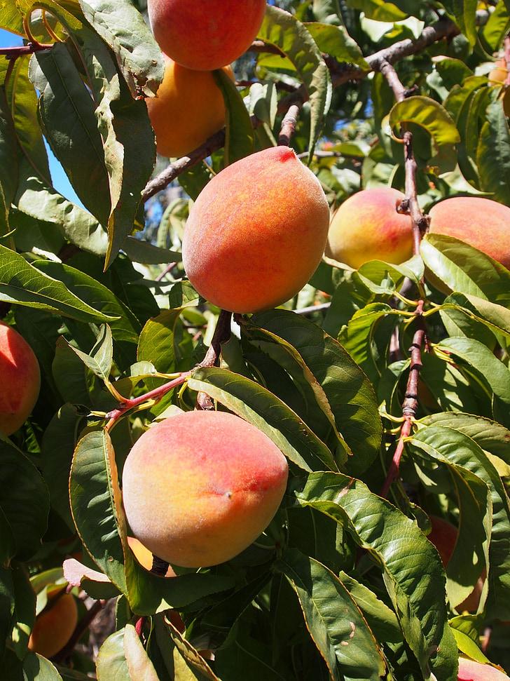 broskyňa, ovocie, zrelé, šťavnaté, čerstvé, jedlo, letné