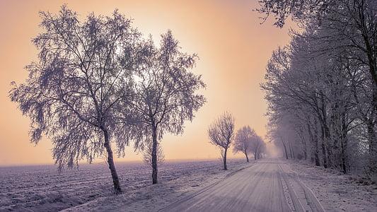 landscape, winter, snow, ripe, winter trees, snowy, cold
