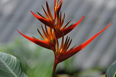 flower, bird of paradise, thailand, plant, petals