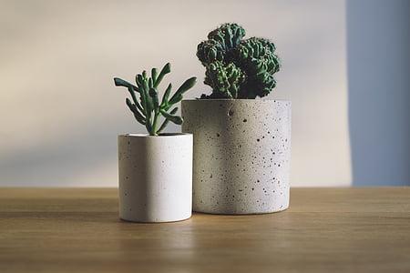 Branco, potenciômetros, verde, plantas, Início, marrom, de madeira
