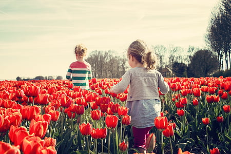 tüdrukud, Laste, tulbid, Holland, kevadel, loodus, Tulip
