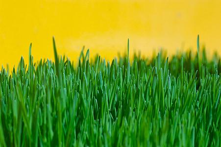 tráva, Zelená, žltá, letné, životné prostredie, jar, rast