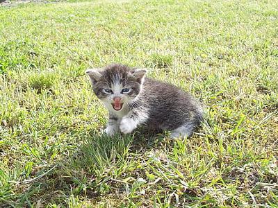 kitten, playing, yard, kitty, young, feline, domestic