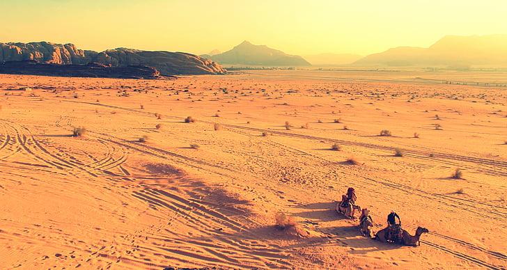África, camelos, deserto, paisagem, montanhas, natureza, areia