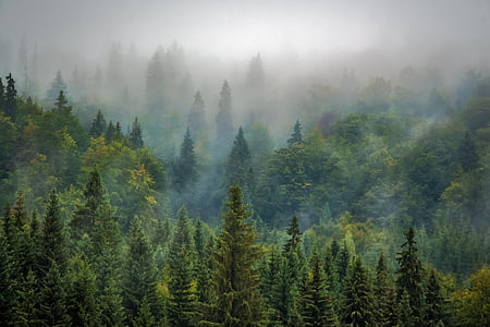краєвид, Природа, ліс, туман, туманні, соснові, сосновий ліс