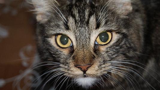 cats, pet, cat, animal, animals, family
