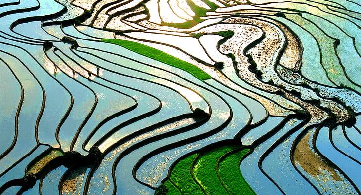 Lao cai, tarasy, zielony, światło słoneczne, Sapa, Wietnam, Natura