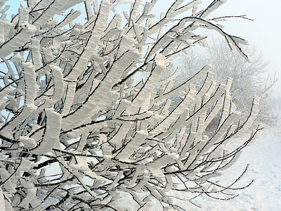 winter, snow, tree, icing, branch, slovakia, frost