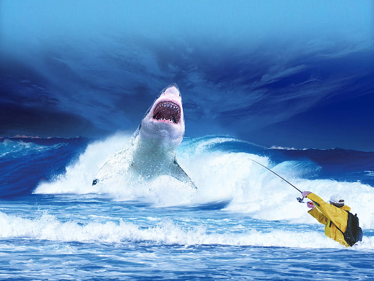 Shark, havet, Ocean, blå, Predator, fiske, fiskaren
