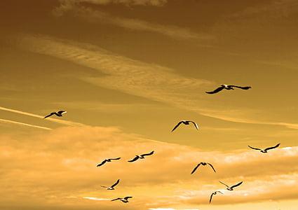 ฝูง, นก, สีเหลือง, ท้องฟ้า, เวลากลางวัน, สัตว์, นก