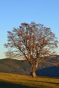 rừng đen, Freiburg, địa danh Schauinsland, cây, mùa thu, thôn dã, Thiên nhiên