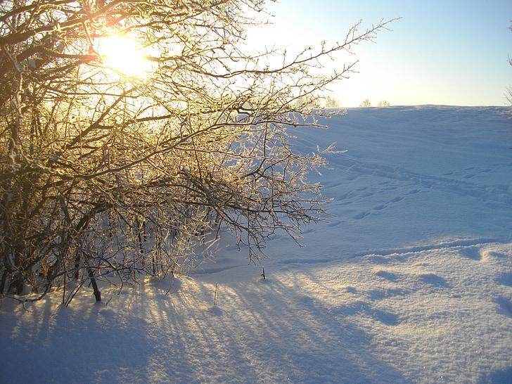 snow, nature, sun, winter