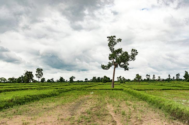 Mead, màu xanh lá cây, Thiên nhiên, cỏ, Thái Lan, gạo, câu lạc bộ Golf
